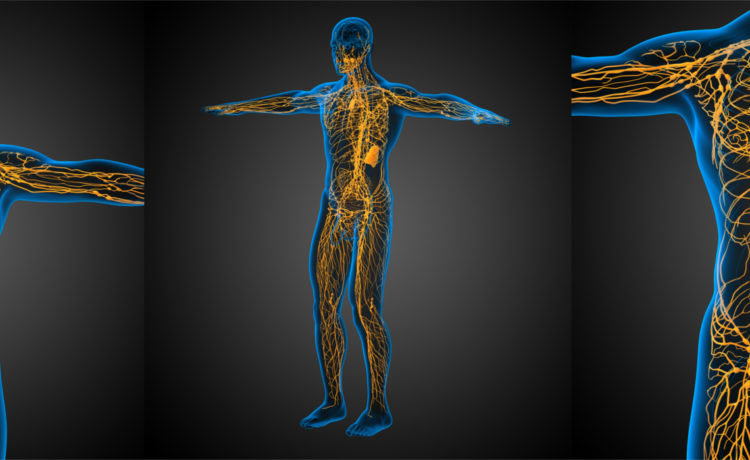 Lymph node stabilisation